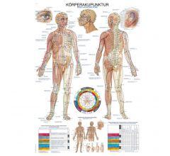 Anatomische Lehrtafel Körperakupunktur